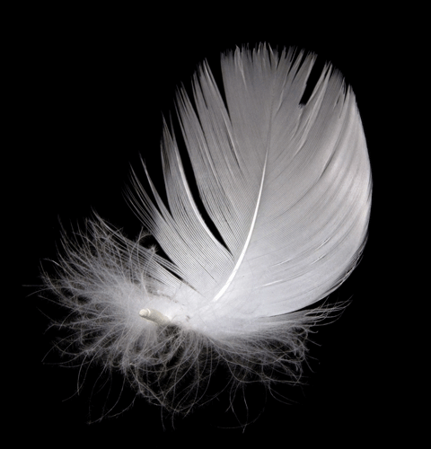 Down Feather Specialization